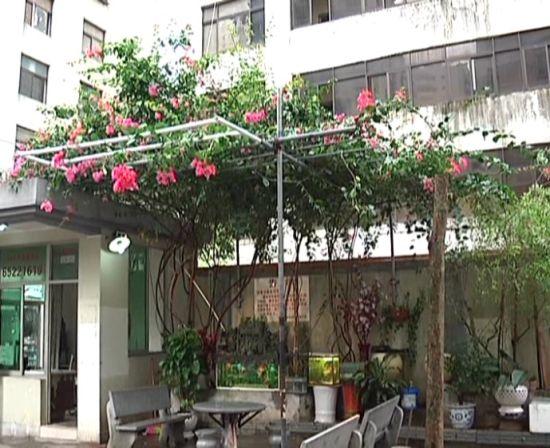 福美公寓的花花草草