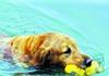 小狗下河捡垃圾