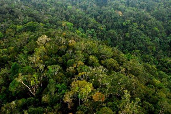 鹦哥岭生长与保存多样的植物群落