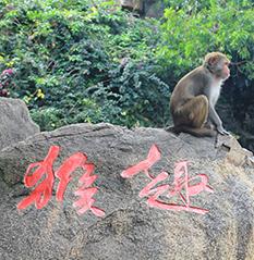 猴岛:娱乐的世界