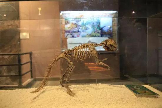 大小洞天有中国最南端唯一的自然博物馆