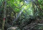 登高七仙岭 海南雨林里深呼吸