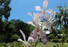 兴隆热带花园世界