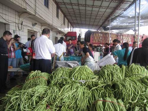 琼岛瓜菜品种单一