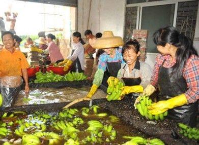 琼海香蕉价格大涨