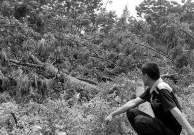 文昌千棵树木被砍