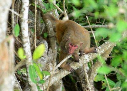 猕猴天天享大餐