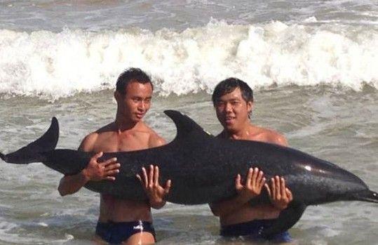 海棠湾海豚待救治